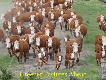 a5._Greener_Pastures_Ahead
